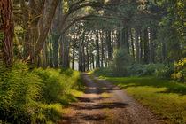 Whitford burrows path by Leighton Collins