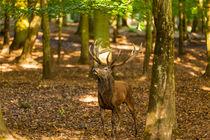 2014-09-27-wildpark-tripsdrill-0901