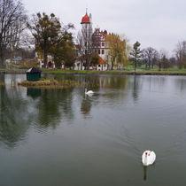 Schwäne vor Schloss Basedow von Sabine Radtke