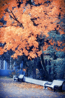 Autumn Park von cinema4design