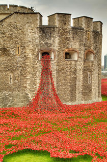 Poppies at the Tower  von Martin Williams