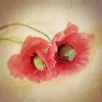 Pair of Poppies - Mohnpärchen by Tania Konnerth