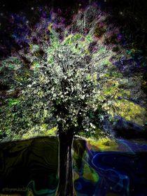 Oberons-tree-watermarked-large
