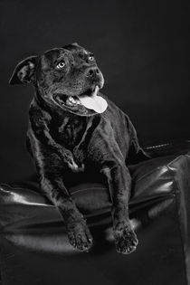 Hund by Martina Raab