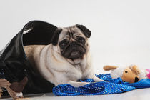 Playtime! by Martina Raab