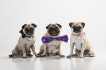 Get the Party started! von Martina Raab