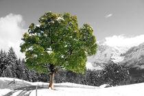 Ein Baum von Gerhard Albicker