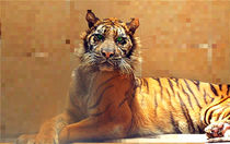 Melani The Miracle Tigress Pixel von bibi-photo-hunter