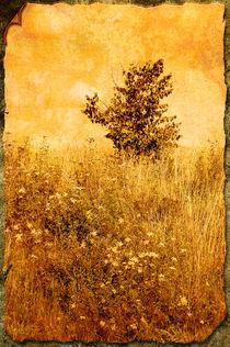 Old Picture of Landscape von Peter-André Sobota
