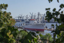 Die Cap San Diego im Hamburger Hafen von ta-views