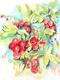 Beeren von Maria Földy