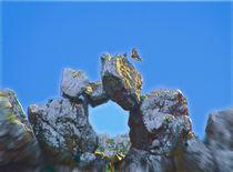Eagles Window by crismanart