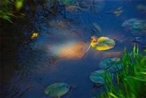 'Water Lily Mystery' von crismanart
