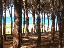 Sardinien-silke-okt-dot-2014-251
