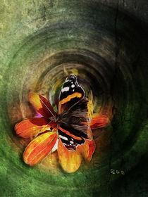 Butterfly on a flower by cdka
