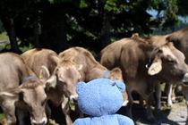 Allein gegen die Kühe by Olga Sander