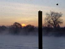 lebeN stets Nebel | Mystic Misty Morning| Animales de la Mañana von artistdesign