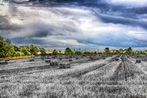 The Farm by David Pyatt