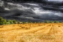 The Farm von David Pyatt