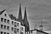 Allgegenwärtig in schwarz-weiss von leddermann