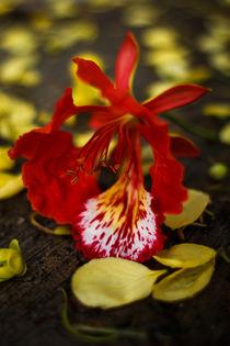 Mayan Spring von Mario Morales Rubi