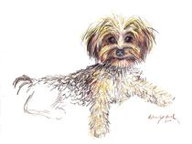 Yorkie Puppy named Joy by Deborah Willard