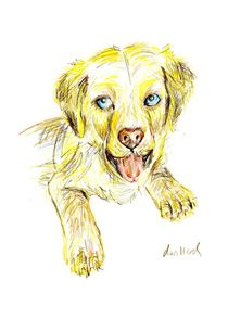 Golden Retriever Puppy by Deborah Willard