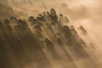 Schatten im Nebelwald II von Walter Layher
