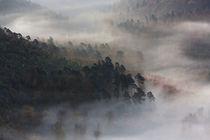 Herbstwald im Nebel von Walter Layher