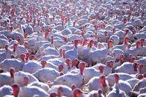 Turkey Day by Jim Corwin
