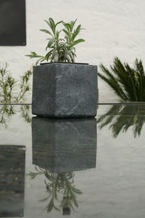 Lavender in the Mirror von atari-frosch