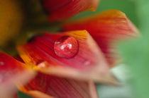 Blütentropfen by Jürgen Müngersdorf