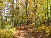 Img-8797-wanderweg-laubwald