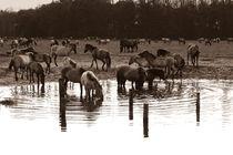 Wildpferde by Bastian  Kienitz