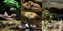 Schlangen-collage