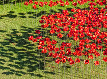 Poppies For The Fallen by Graham Prentice