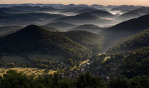 Blick über den Pfälzerwald im Morgenlicht von Walter Layher