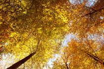 Herbstmomente_03 by tr-design