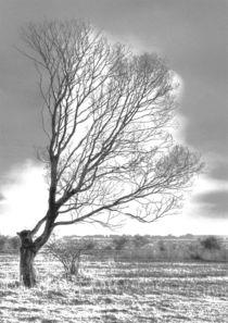 Windflüchter 3 by Jens Hennig