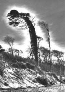 Windflüchter 2 by Jens Hennig
