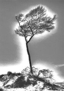 Windflüchter 1 by Jens Hennig
