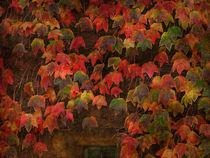 Autumn Most Colourful by Alexandra Lavizzari