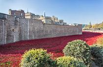 Tower Of London Poppies von Graham Prentice