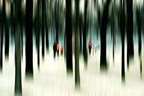 Zwischen den Bäumen  by Bastian  Kienitz