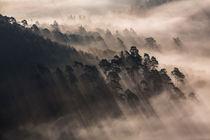 Schatten im Nebelwald III von Walter Layher