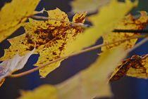 Herbst2014-3
