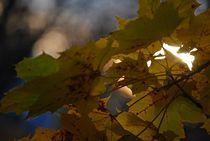 Herbst2014-9