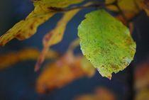 Herbst2014-22