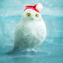 snowball goes xmas by photoplace