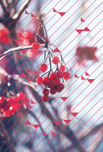 red berry in winter by Eva Stadler